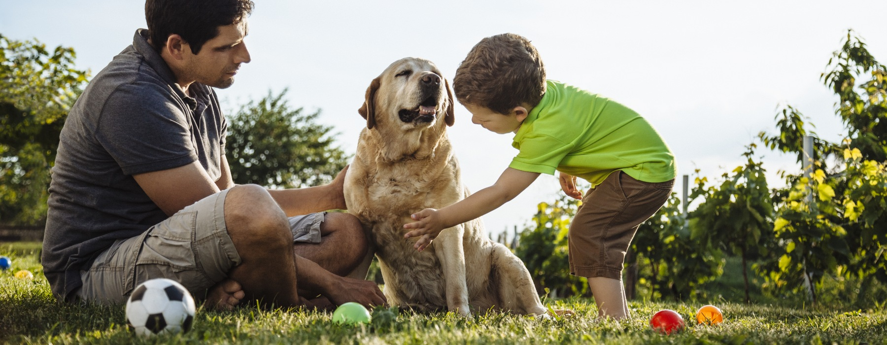 man and child playing with dog